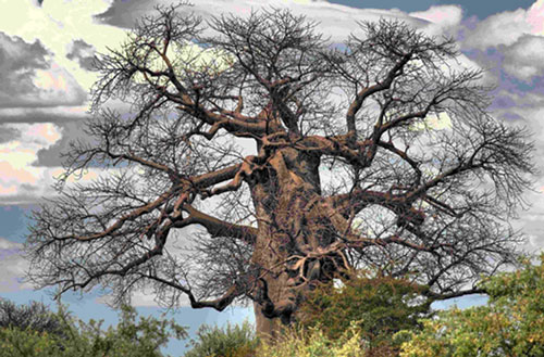 TUCSIN Tsumkwe - excursions: Baobab Tree, activities