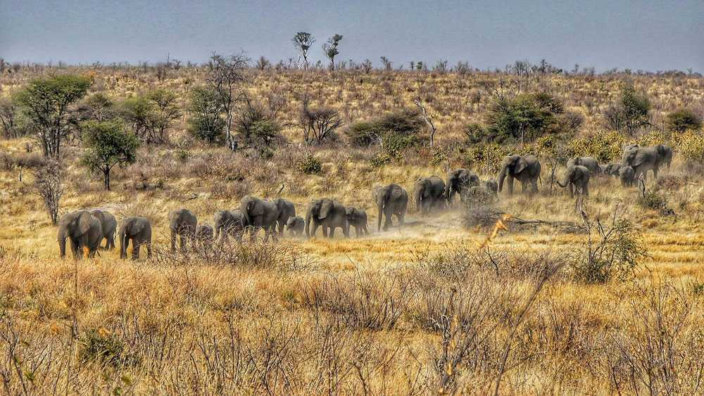TUCSIN Tsumkwe Lodge: Tsumkwe region elephants walking, activities