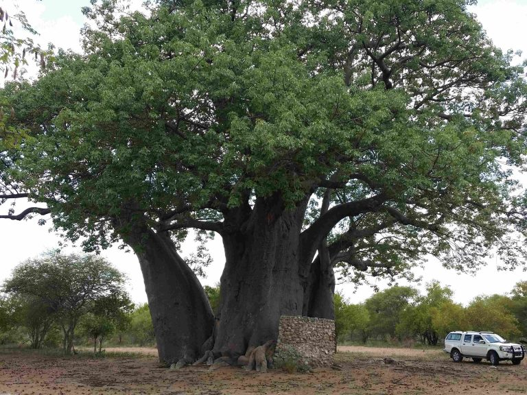 TUCSIN Tsumkwe: Excursion to see Baobab trees