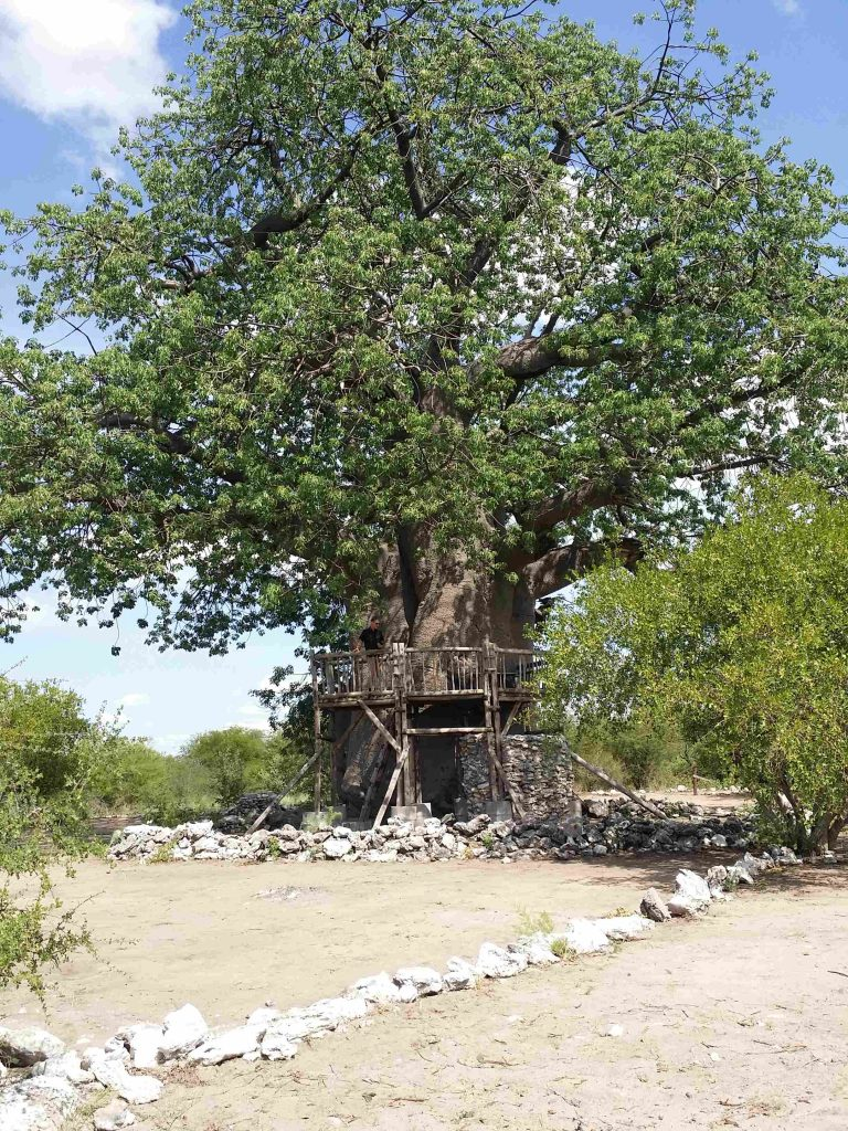 TUCSIN Tsumkwe Lodge: Beautiful Baobab Trees